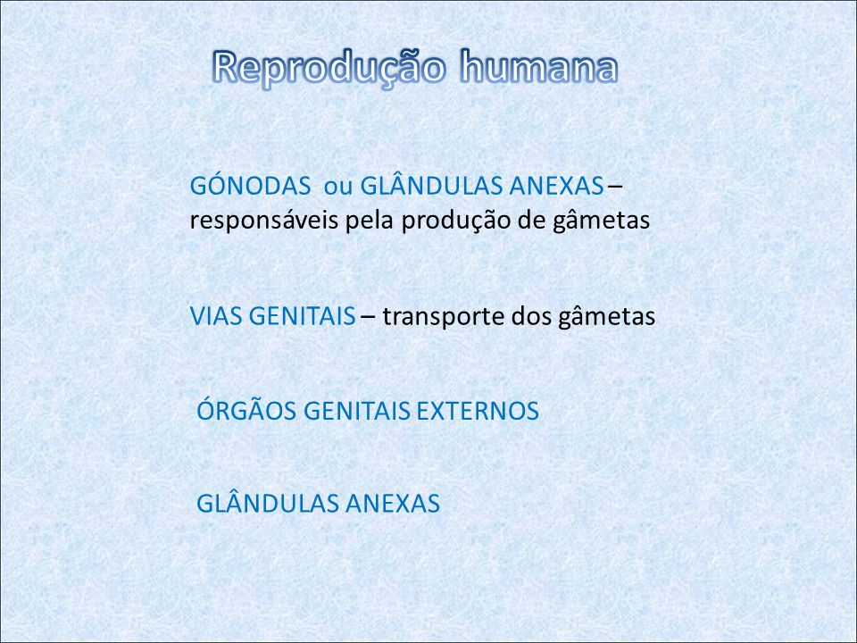 GÓNODAS ou GLÂNDULAS ANEXAS – responsáveis pela produção de gâmetas VIAS GENITAIS – transporte dos gâmetas ÓRGÃOS GENITAIS EXTERNOS GLÂNDULAS ANEXAS