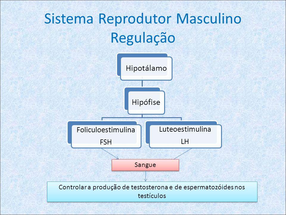 Sistema Reprodutor Masculino Regulação HipotálamoHipófise Foliculoestimulina FSH Luteoestimulina LH Sangue Controlar a produção de testosterona e de espermatozóides nos testículos
