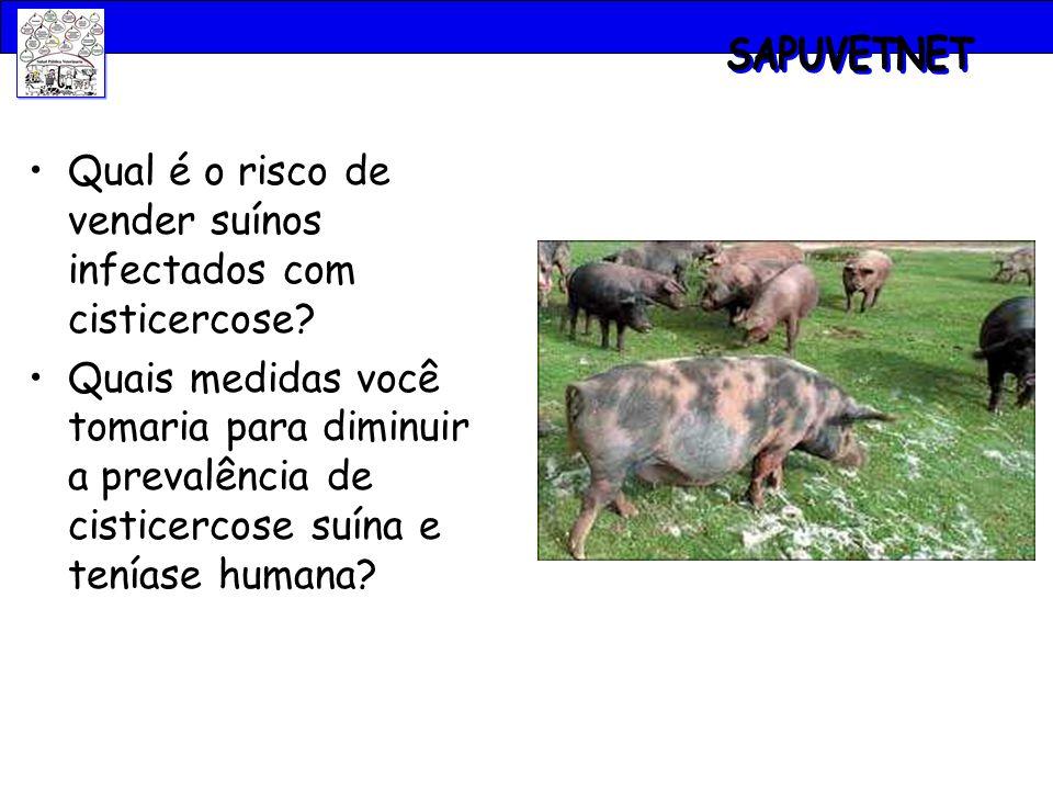 Qual é o risco de vender suínos infectados com cisticercose? Quais medidas você tomaria para diminuir a prevalência de cisticercose suína e teníase hu