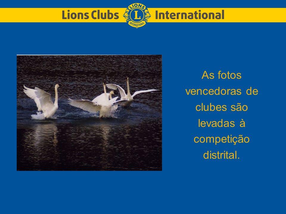As fotos vencedoras de clubes são levadas à competição distrital.