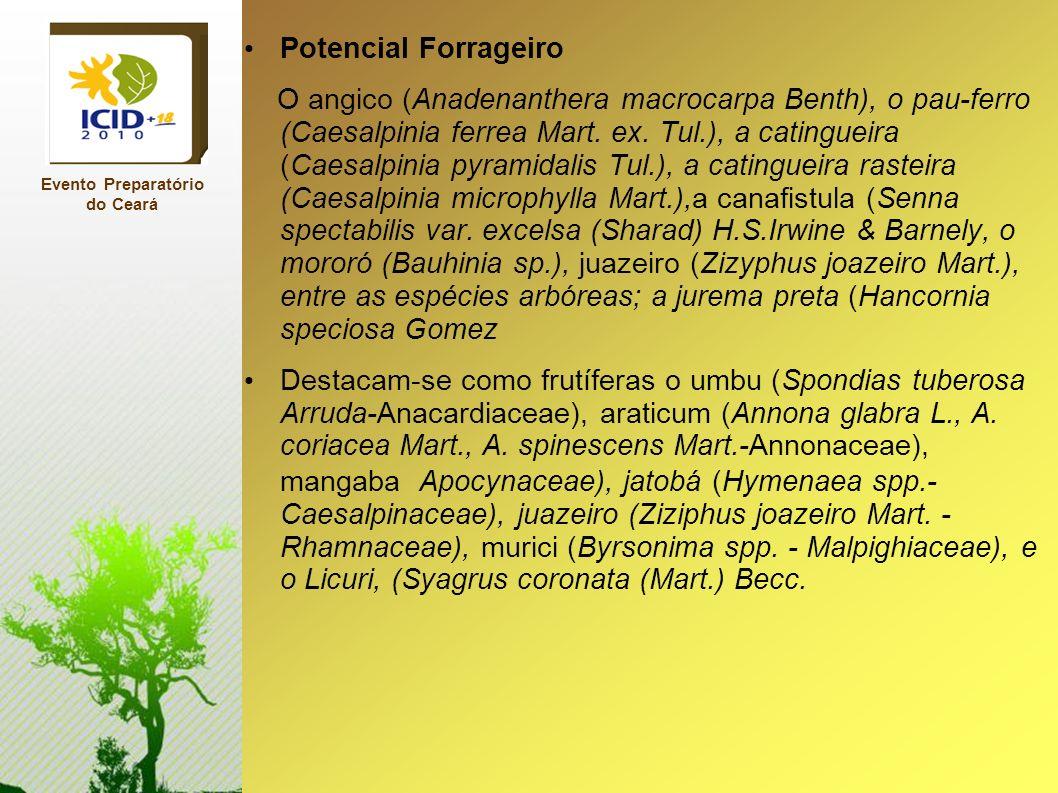 Potencial Forrageiro O angico (Anadenanthera macrocarpa Benth), o pau-ferro (Caesalpinia ferrea Mart. ex. Tul.), a catingueira (Caesalpinia pyramidali