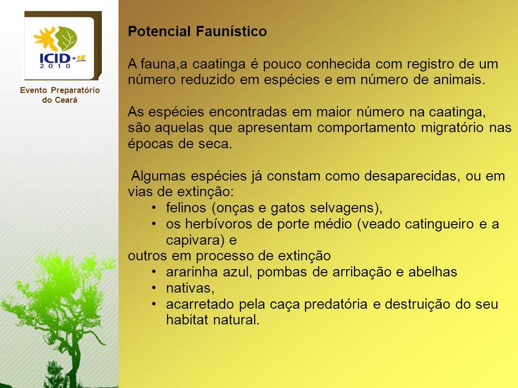 Evento Preparatório do Ceará Potencial Faunístico A fauna,a caatinga é pouco conhecida com registro de um número reduzido em espécies e em número de a