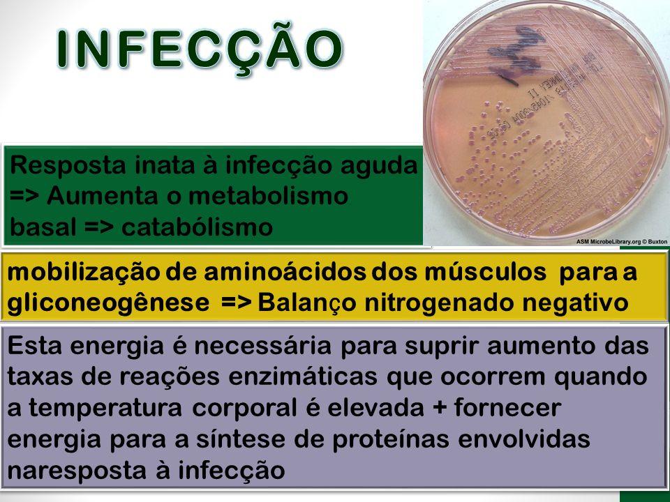 Resposta inata à infecção aguda => Aumenta o metabolismo basal => catabólismo mobilização de aminoácidos dos músculos para a gliconeogênese => Balan ç