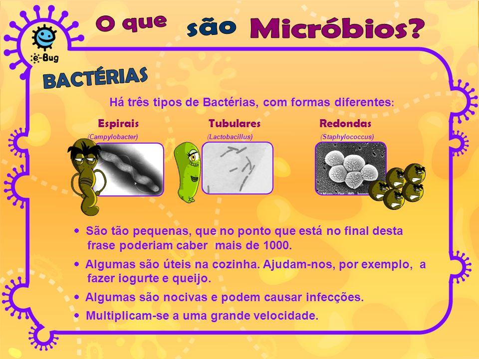 Há três tipos de Bactérias, com formas diferentes : Espirais Tubulares Redondas (Campylobacter) (Lactobacillus) (Staphylococcus) São tão pequenas, que