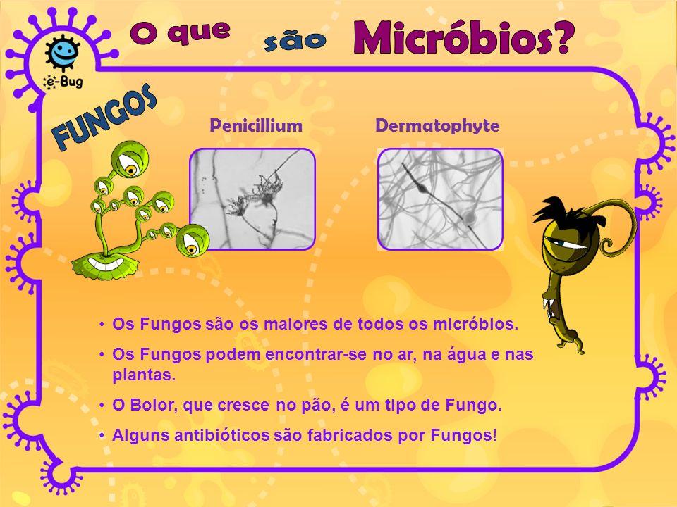 PenicilliumDermatophyte Os Fungos são os maiores de todos os micróbios. Os Fungos podem encontrar-se no ar, na água e nas plantas. O Bolor, que cresce