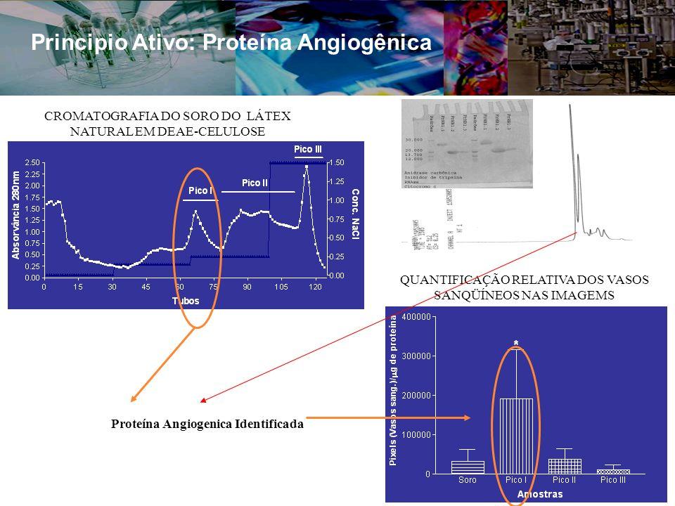 Principio Ativo: Proteína Angiogênica QUANTIFICAÇÃO RELATIVA DOS VASOS SANQÜÍNEOS NAS IMAGEMS CROMATOGRAFIA DO SORO DO LÁTEX NATURAL EM DEAE-CELULOSE Proteína Angiogenica Identificada