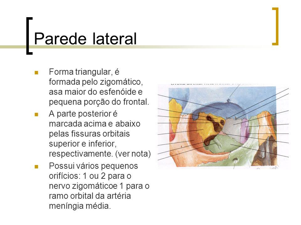Parede lateral Forma triangular, é formada pelo zigomático, asa maior do esfenóide e pequena porção do frontal. A parte posterior é marcada acima e ab
