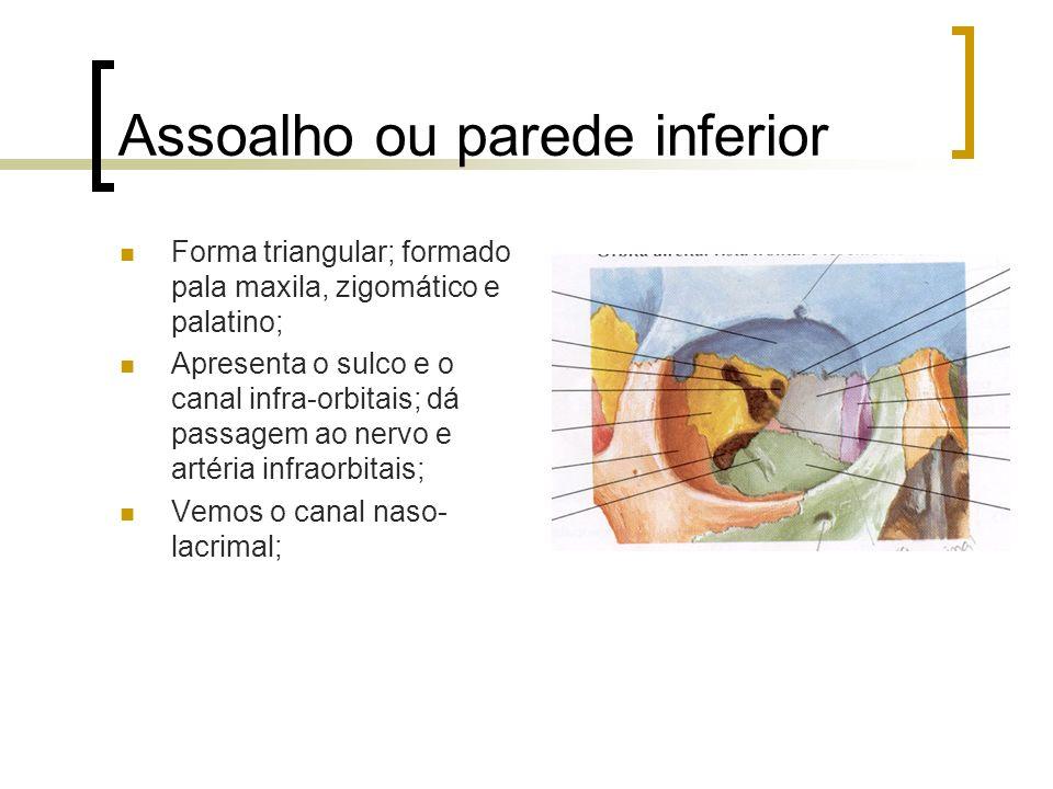 Assoalho ou parede inferior Forma triangular; formado pala maxila, zigomático e palatino; Apresenta o sulco e o canal infra-orbitais; dá passagem ao n