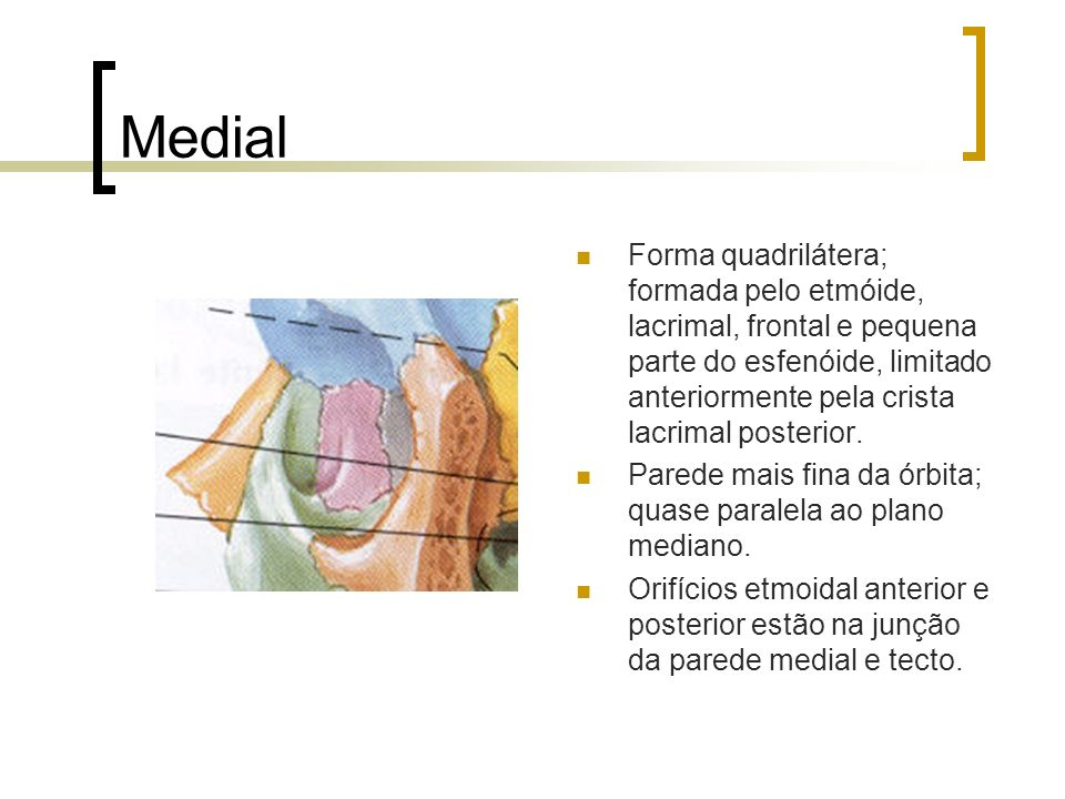 Medial Forma quadrilátera; formada pelo etmóide, lacrimal, frontal e pequena parte do esfenóide, limitado anteriormente pela crista lacrimal posterior