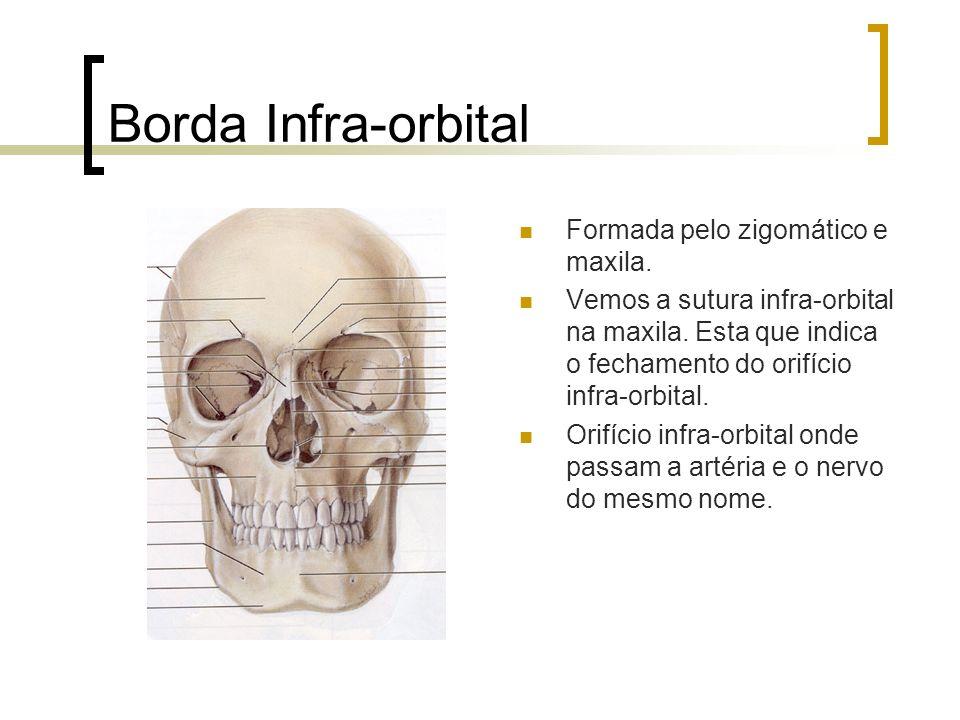 Borda Infra-orbital Formada pelo zigomático e maxila. Vemos a sutura infra-orbital na maxila. Esta que indica o fechamento do orifício infra-orbital.