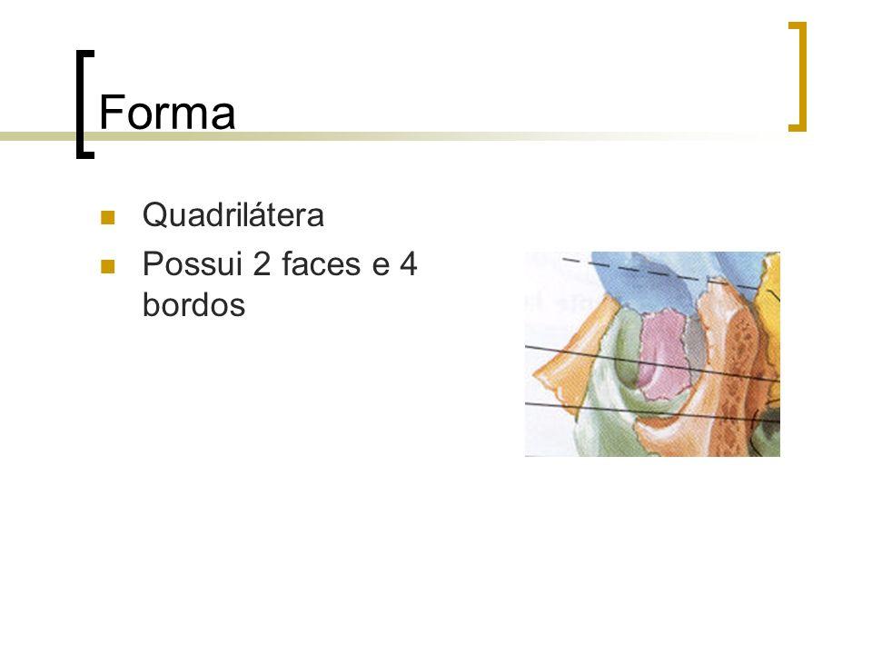Assoalho ou parede inferior Forma triangular; formado pala maxila, zigomático e palatino; Apresenta o sulco e o canal infra-orbitais; dá passagem ao nervo e artéria infraorbitais; Vemos o canal naso- lacrimal;