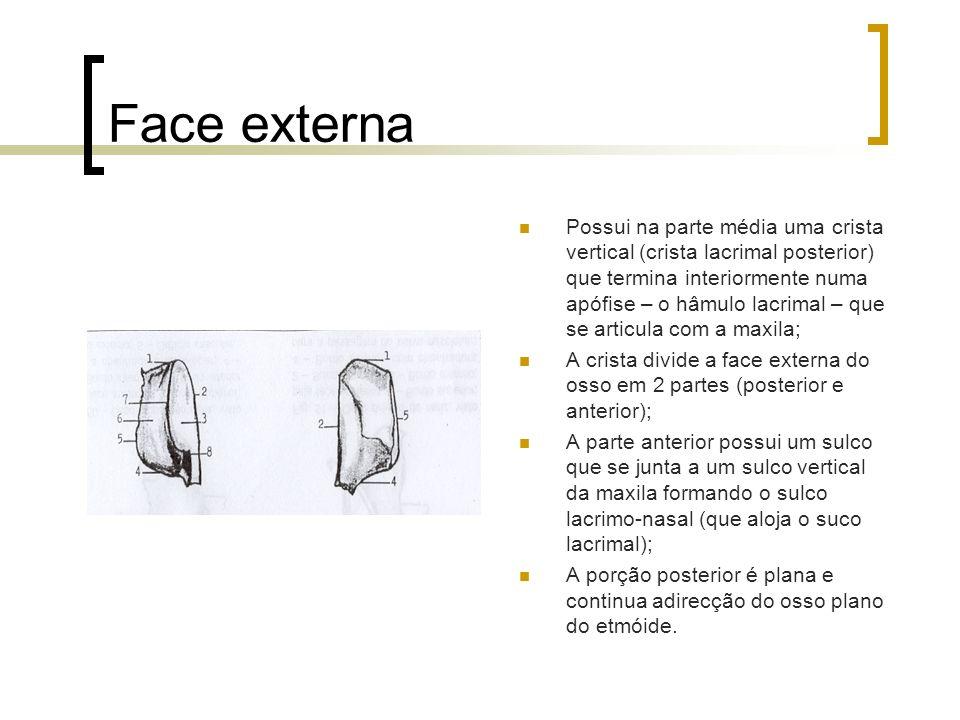 Face externa Possui na parte média uma crista vertical (crista lacrimal posterior) que termina interiormente numa apófise – o hâmulo lacrimal – que se