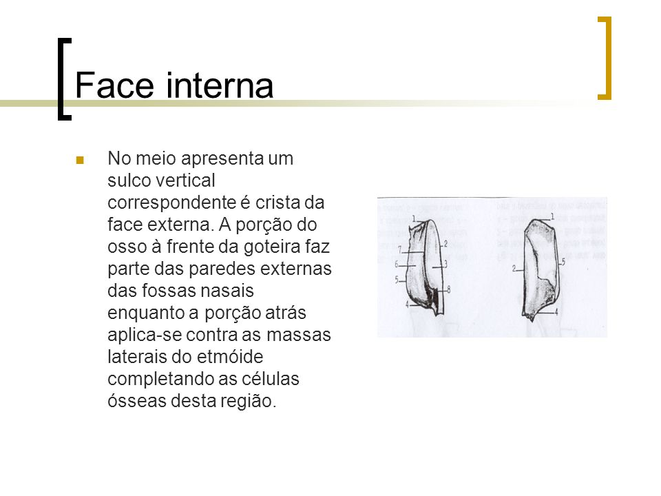 Face interna No meio apresenta um sulco vertical correspondente é crista da face externa. A porção do osso à frente da goteira faz parte das paredes e