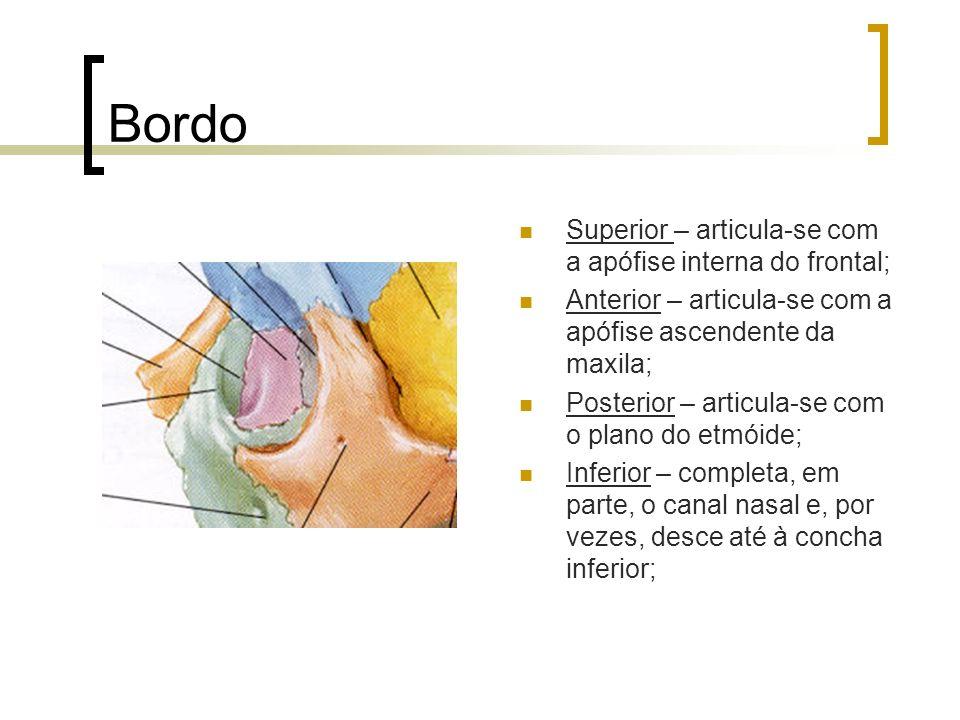 Bordo Superior – articula-se com a apófise interna do frontal; Anterior – articula-se com a apófise ascendente da maxila; Posterior – articula-se com