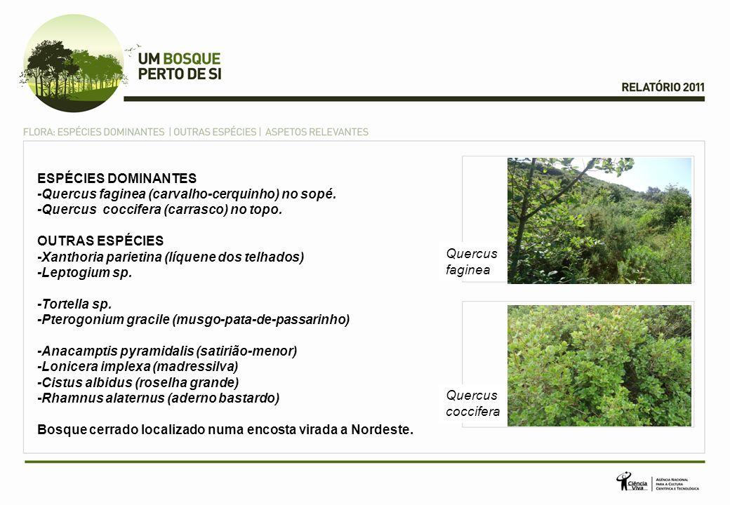 ESPÉCIES DOMINANTES -Quercus faginea (carvalho-cerquinho) no sopé. -Quercus coccifera (carrasco) no topo. OUTRAS ESPÉCIES -Xanthoria parietina (líquen