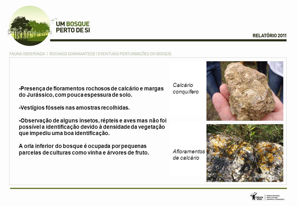 -Presença de floramentos rochosos de calcário e margas do Jurássico, com pouca espessura de solo. -Vestígios fósseis nas amostras recolhidas. -Observa