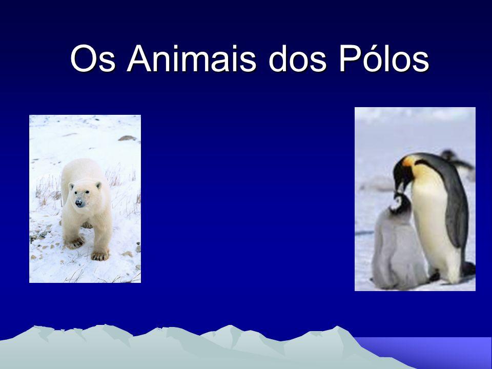 Ursos - Polares Os Ursos Polares são os Ursos maiores do mundo.