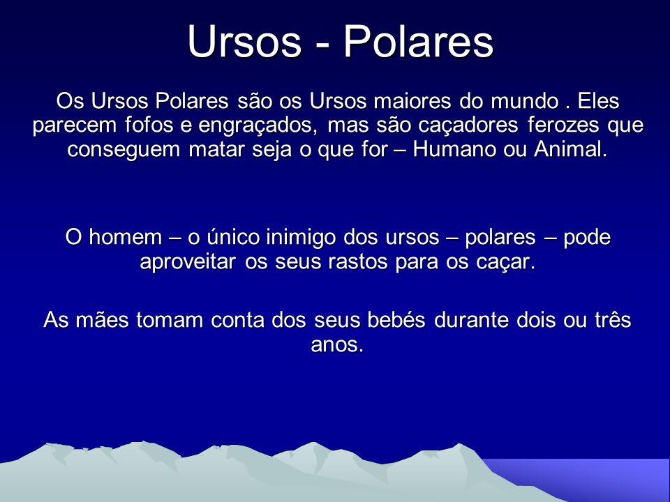 Este trabalho foi elaborado pelas alunas: Maria Beatriz Sousa Vieira Sara Oliveira Ramos 6º2