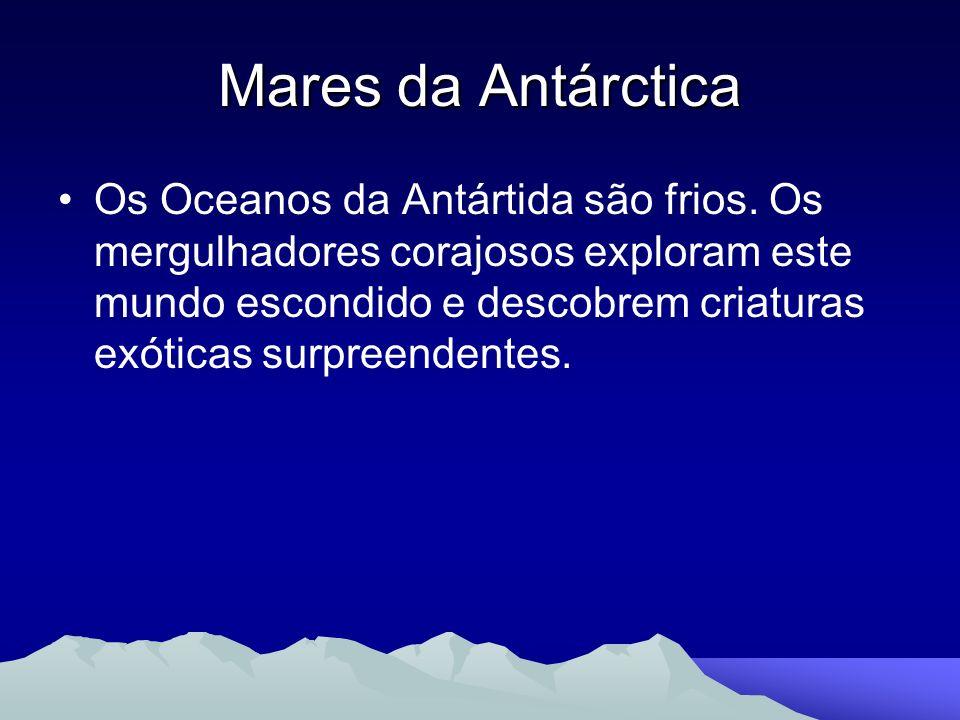 Mares da Antárctica Os Oceanos da Antártida são frios. Os mergulhadores corajosos exploram este mundo escondido e descobrem criaturas exóticas surpree