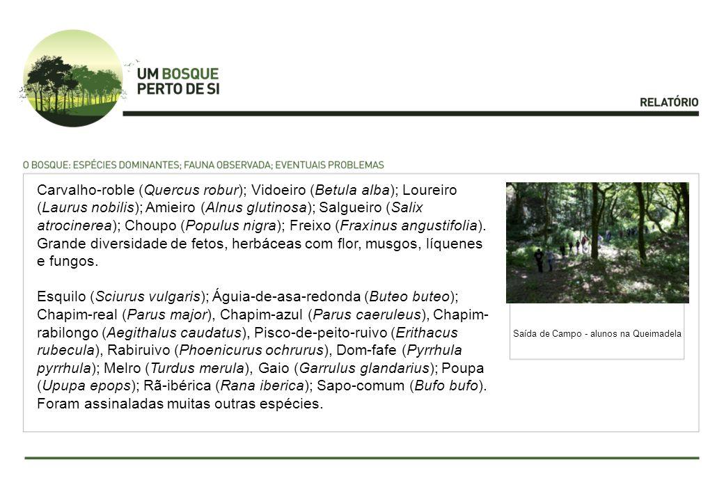 Carvalho-roble (Quercus robur); Vidoeiro (Betula alba); Loureiro (Laurus nobilis); Amieiro (Alnus glutinosa); Salgueiro (Salix atrocinerea); Choupo (P