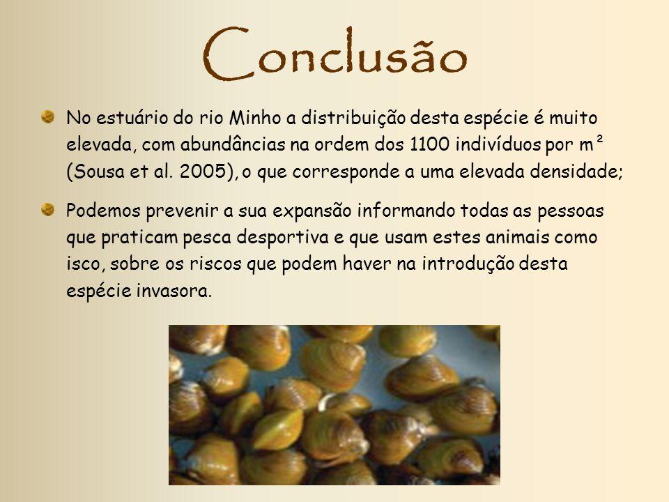 Conclusão No estuário do rio Minho a distribuição desta espécie é muito elevada, com abundâncias na ordem dos 1100 indivíduos por m² (Sousa et al. 200