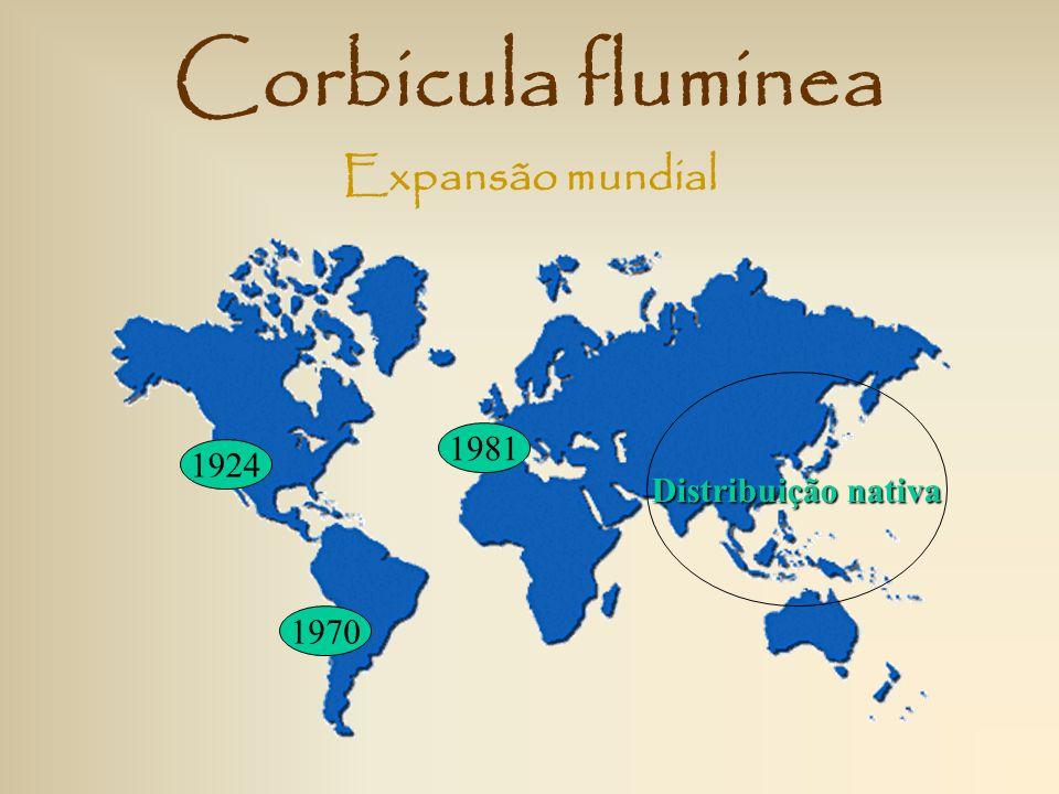 Corbicula fluminea Expansão mundial Distribuição nativa 1981 1924 1970