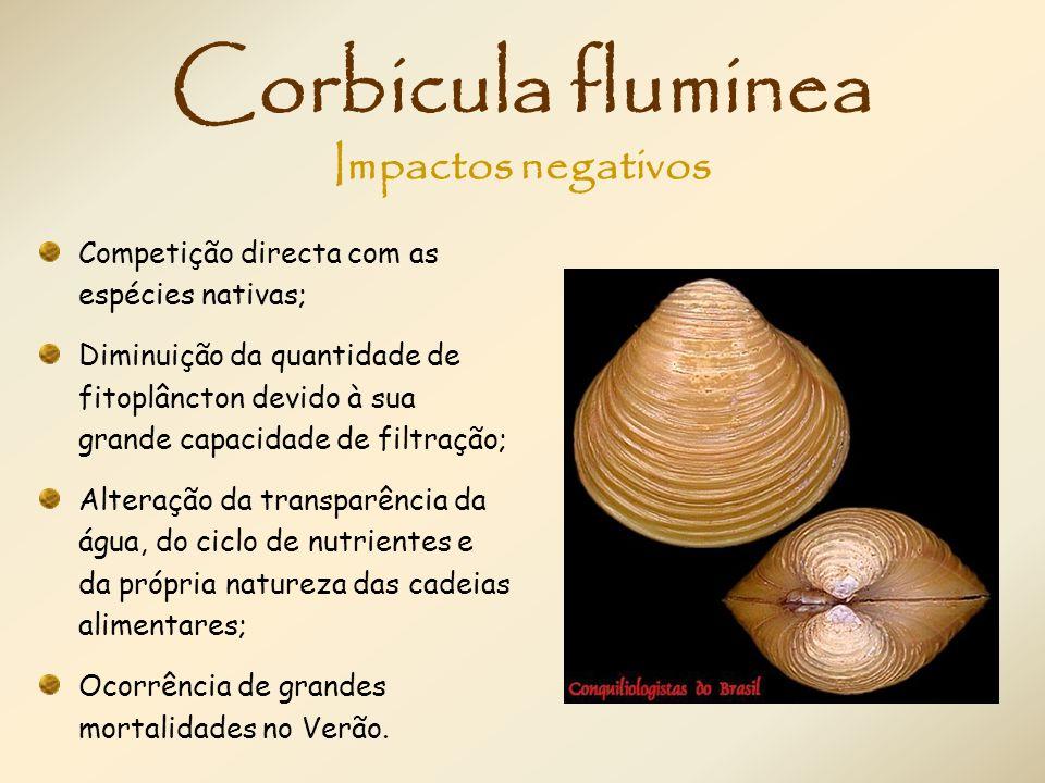 Corbicula fluminea Competição directa com as espécies nativas; Diminuição da quantidade de fitoplâncton devido à sua grande capacidade de filtração; A