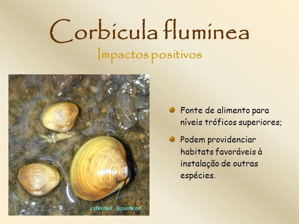 Corbicula fluminea Fonte de alimento para níveis tróficos superiores; Podem providenciar habitats favoráveis à instalação de outras espécies. Impactos