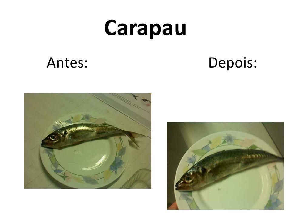 9 Análise rápida Numa primeira analise rápida observou-se que antes da experiência o peixe apresentava uma cor brilhante e consistência dura.
