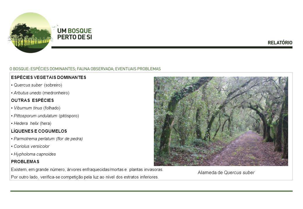 ESPÉCIES VEGETAIS DOMINANTES Quercus suber (sobreiro) Arbutus unedo (medronheiro) OUTRAS ESPÉCIES Viburnum tinus (folhado) Pittosporum undulatum (pitó