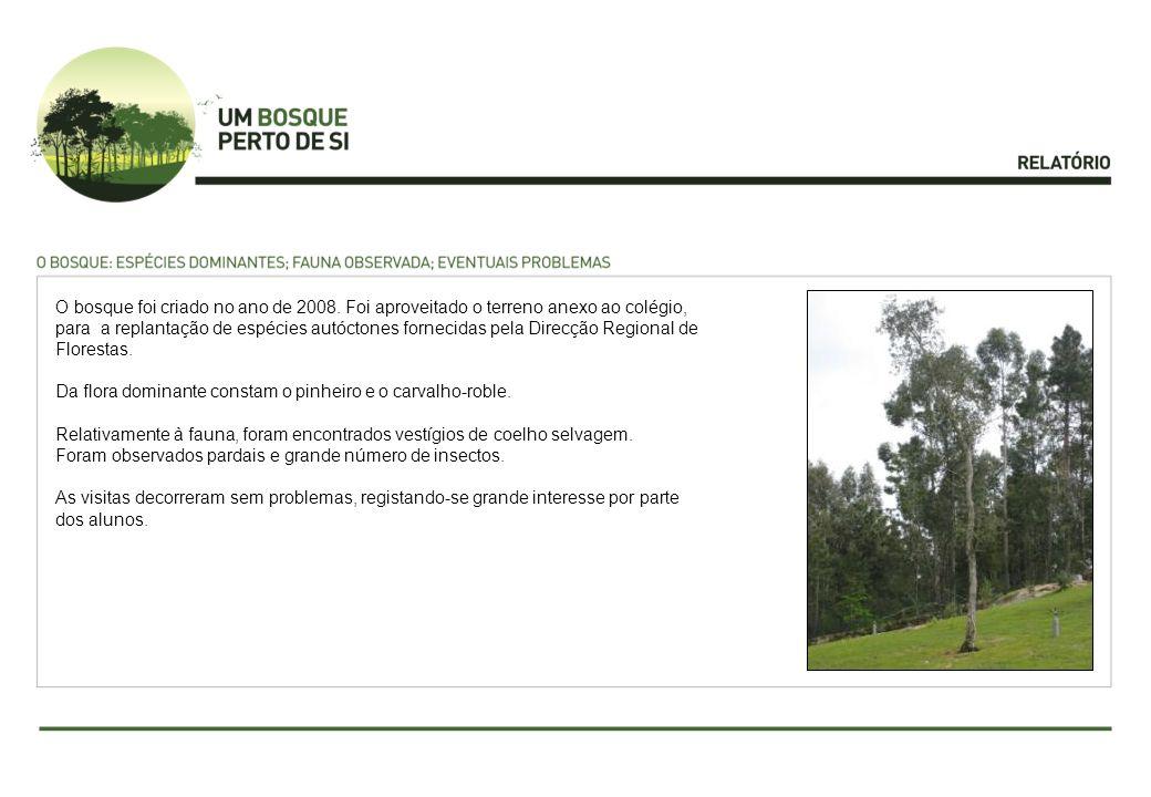 O bosque foi criado no ano de 2008. Foi aproveitado o terreno anexo ao colégio, para a replantação de espécies autóctones fornecidas pela Direcção Reg