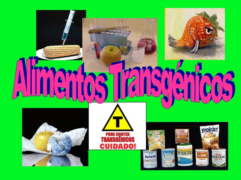 Os alimentos transgénicos (ou OGMs) são organismos geneticamente modificados.