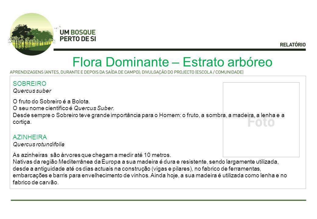 Flora Dominante – Estrato arbóreo SOBREIRO Quercus suber O fruto do Sobreiro é a Bolota.