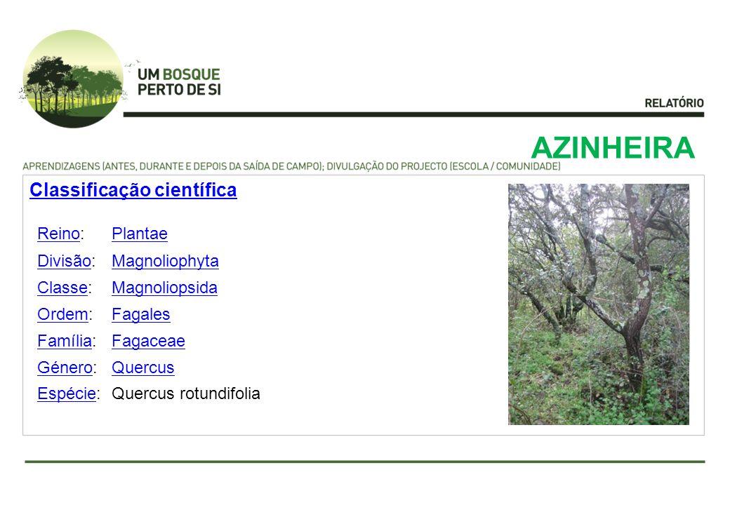 AZINHEIRA ReinoReino:Plantae DivisãoDivisão:Magnoliophyta ClasseClasse:Magnoliopsida OrdemOrdem:Fagales FamíliaFamília:Fagaceae GéneroGénero:Quercus E