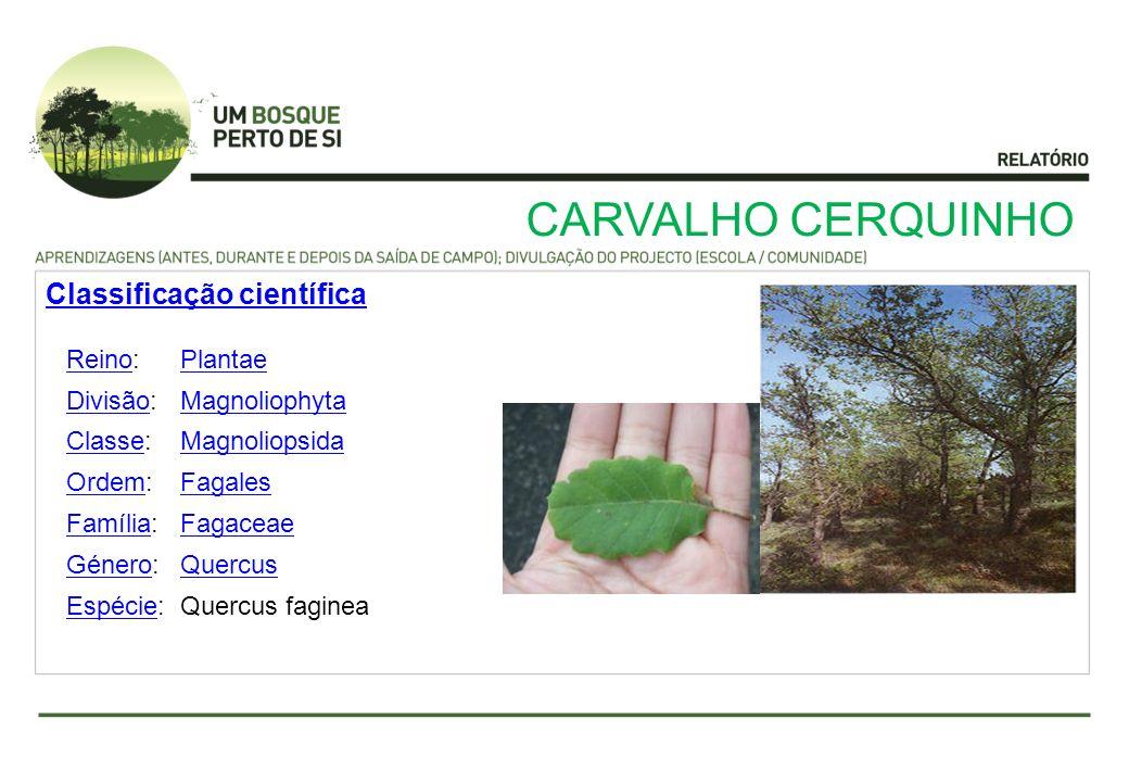 CARVALHO CERQUINHO ReinoReino:Plantae DivisãoDivisão:Magnoliophyta ClasseClasse:Magnoliopsida OrdemOrdem:Fagales FamíliaFamília:Fagaceae GéneroGénero: