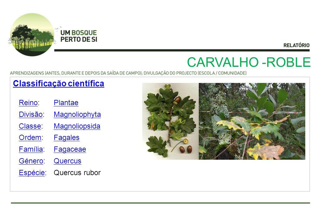 CARVALHO -ROBLE ReinoReino:Plantae DivisãoDivisão:Magnoliophyta ClasseClasse:Magnoliopsida OrdemOrdem:Fagales FamíliaFamília:Fagaceae GéneroGénero:Que