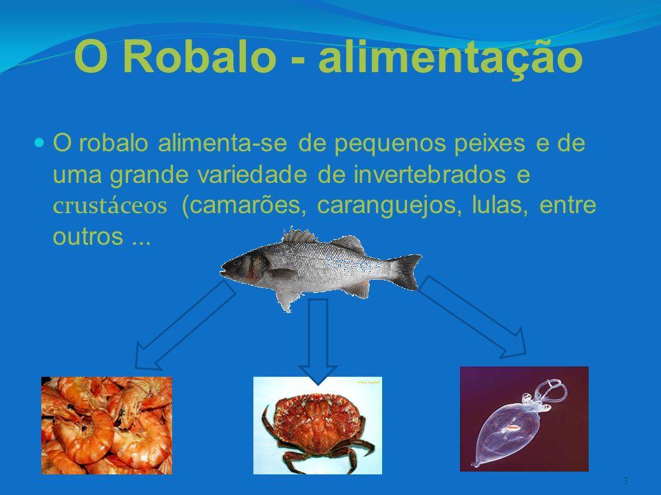 3 O Robalo - alimentação O robalo alimenta-se de pequenos peixes e de uma grande variedade de invertebrados e crustáceos (camarões, caranguejos, lulas