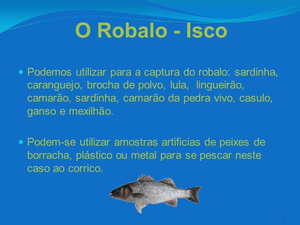 5 O Robalo - Isco Podemos utilizar para a captura do robalo: sardinha, caranguejo, brocha de polvo, lula, lingueirão, camarão, sardinha, camarão da pe