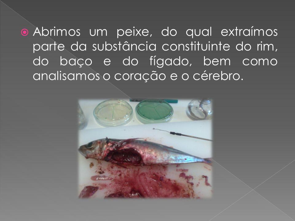 Abrimos um peixe, do qual extraímos parte da substância constituinte do rim, do baço e do fígado, bem como analisamos o coração e o cérebro.