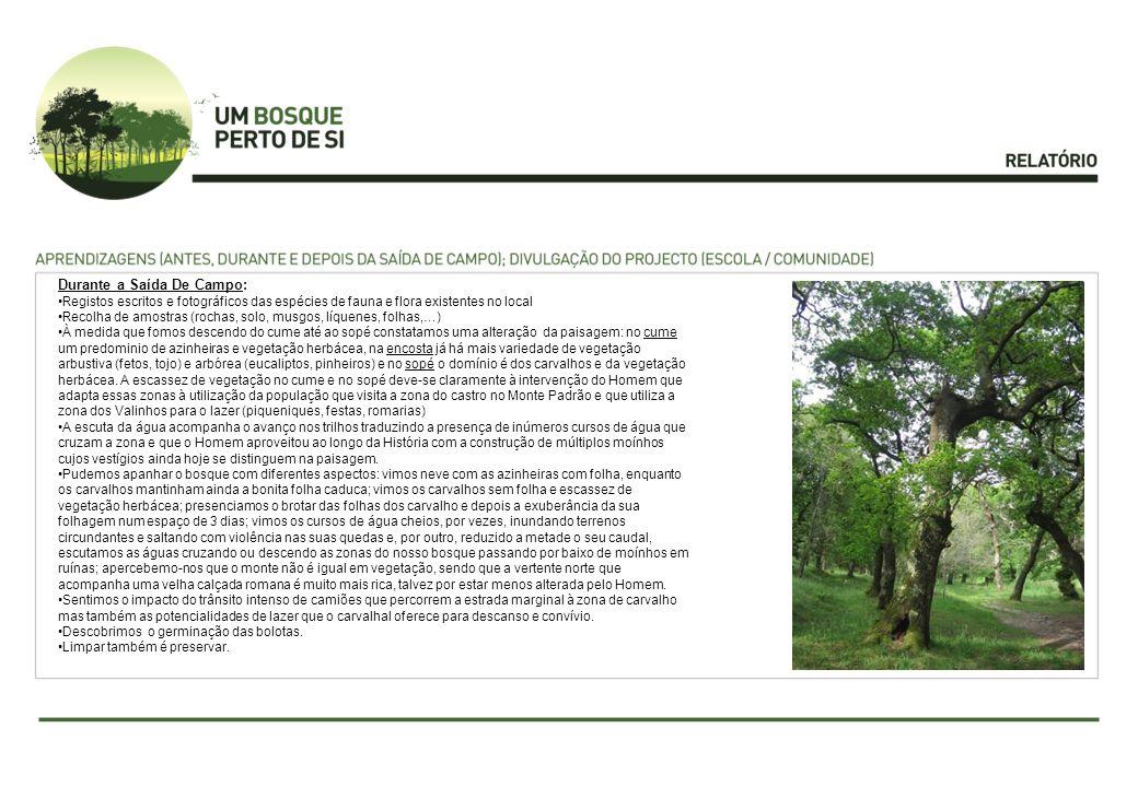 Durante a Saída De Campo: Registos escritos e fotográficos das espécies de fauna e flora existentes no local Recolha de amostras (rochas, solo, musgos, líquenes, folhas,…) À medida que fomos descendo do cume até ao sopé constatamos uma alteração da paisagem: no cume um predominio de azinheiras e vegetação herbácea, na encosta já há mais variedade de vegetação arbustiva (fetos, tojo) e arbórea (eucaliptos, pinheiros) e no sopé o domínio é dos carvalhos e da vegetação herbácea.