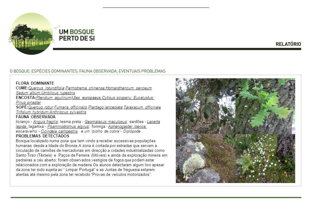 FLORA DOMINANTE CUME:Quercus rotundifolia;Parmotrema chinense;Homalothericum sericeum Sedum album;Umbilicus rupestris ENCOSTA:Pteridium aquilinum;Ulex europaeus;Cytisus scopariu; Eucalyptus; Pinus pinaster SOPÉ:Quercus robur;Fumaria officinalis;Plantago lanceolata;Taraxacum officinale Trifolium hybridum;Anthriscus sylvestris FAUNA OBSERVADA licranço - Anguis fragilis; lesma preta - Geomalacus maculosus; sardões - Lacerta lepida ;lagartixa - Psammodromus algirus; formiga - Aphenogaster iberica; escaravelho - Cicindela campestris e um piolho de cobra- Diplópode PROBLEMAS DETECTADOS Bosque localizado numa zona que tem vindo a receber sucessivas populações humanas desde a Idade do Bronze.A zona é cortada por estradas que servem a circulação de camiões de mercadorias em direcção a cidades industrializadas como Santo Tirso (Têxteis) e Paços de Ferreira (Móveis) e ainda de exploração mineira em pedreiras a céu aberto; foram observados vestígios de fogos que podem estar relacionados com a exploração de madeira.Os alunos detectaram algum lixo apesar da zona ter sido sujeita ao Limpar Portugal e as Juntas de freguesia estarem atentas até mesmo pela zona ter recebido Provas de veículos motorizados.