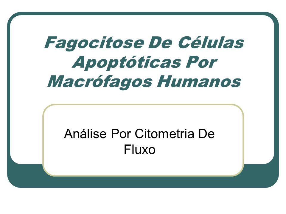 Fagocitose De Células Apoptóticas Por Macrófagos Humanos Análise Por Citometria De Fluxo