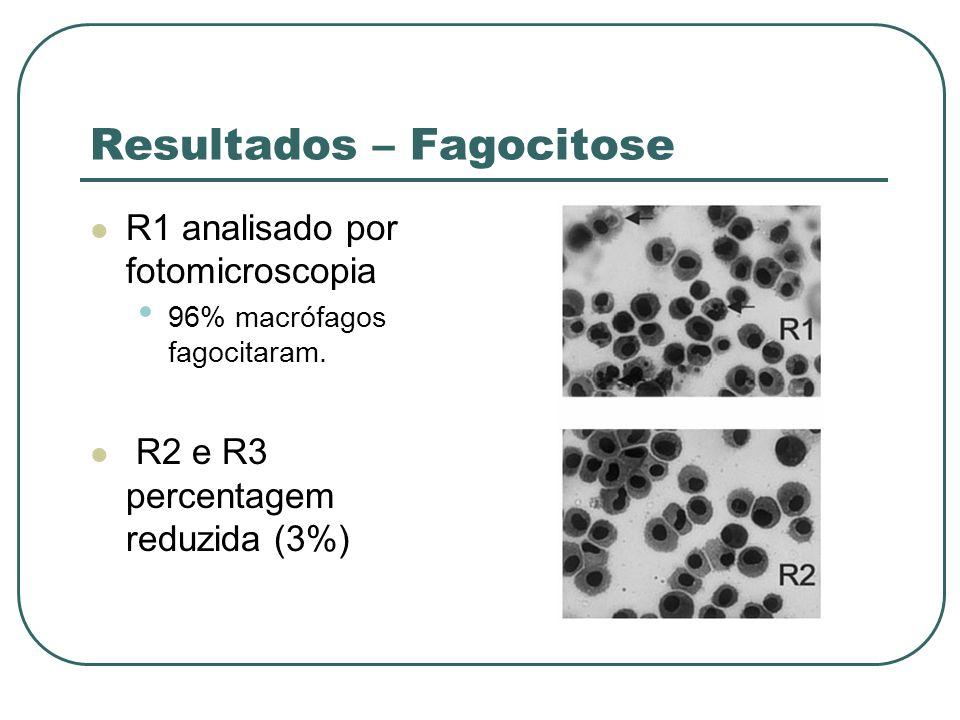 Resultados – Fagocitose R1 analisado por fotomicroscopia 96% macrófagos fagocitaram. R2 e R3 percentagem reduzida (3%)