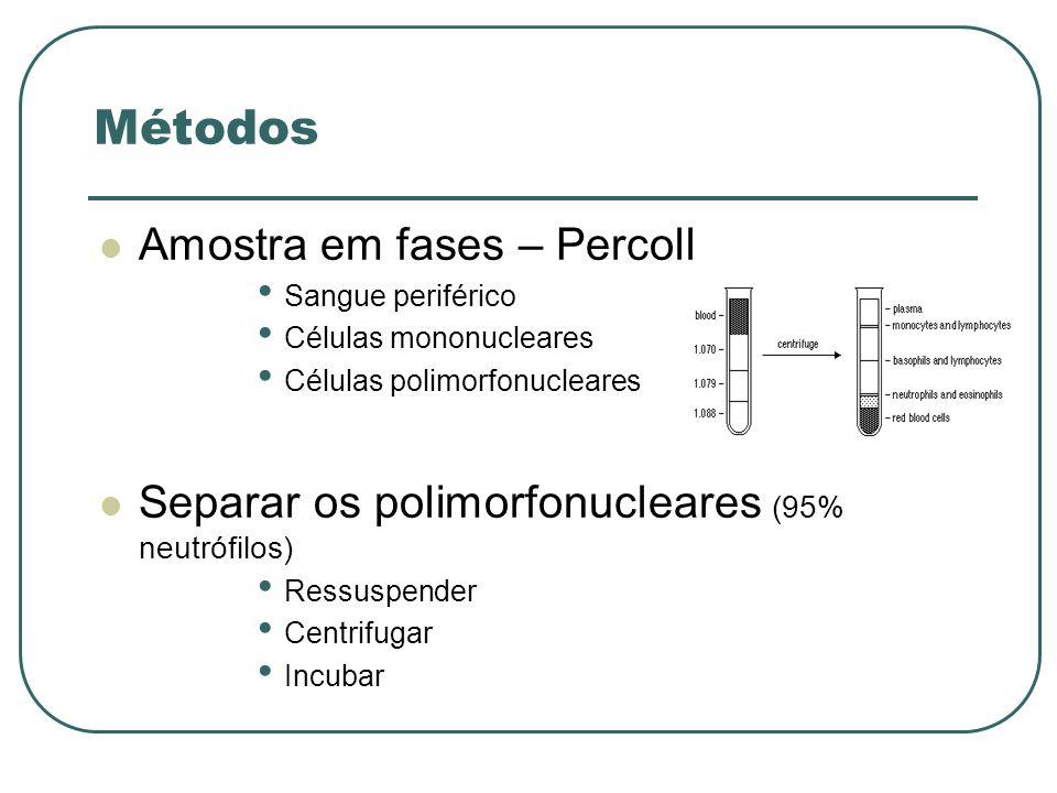 Métodos Amostra em fases – Percoll Sangue periférico Células mononucleares Células polimorfonucleares Separar os polimorfonucleares (95% neutrófilos)