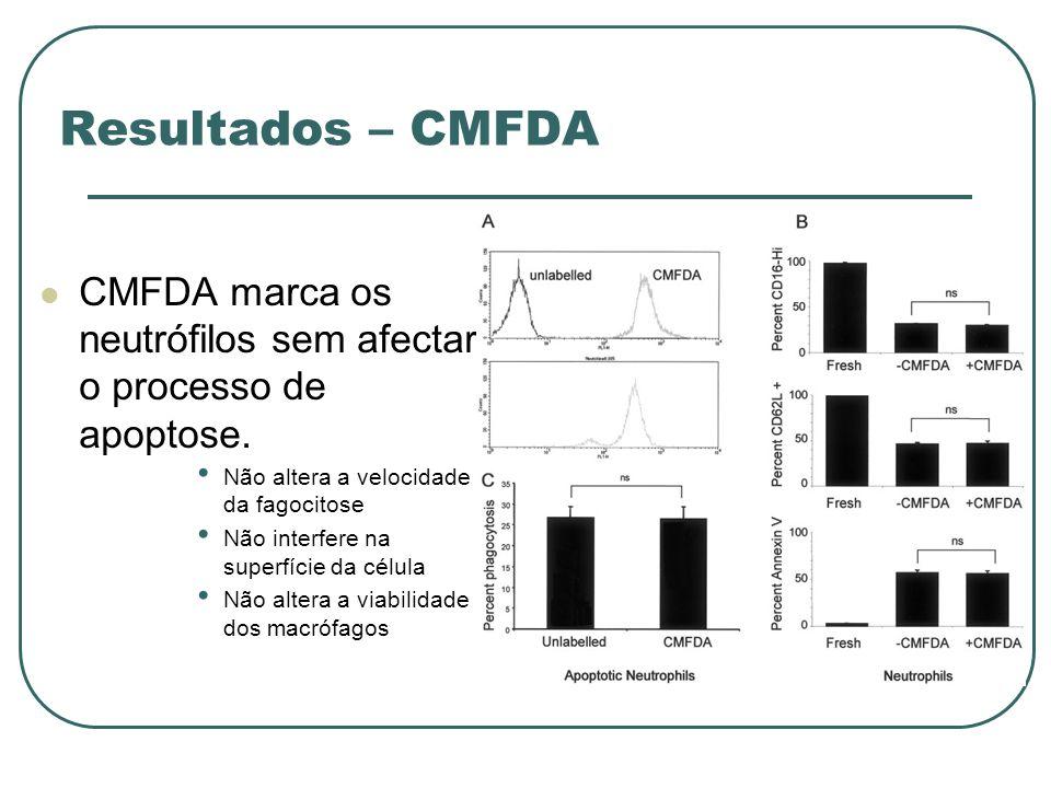 Resultados – CMFDA CMFDA marca os neutrófilos sem afectar o processo de apoptose. Não altera a velocidade da fagocitose Não interfere na superfície da