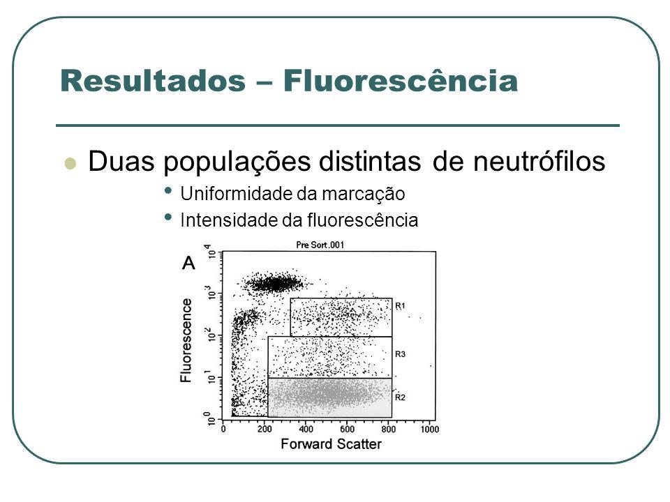Resultados – Fluorescência Duas populações distintas de neutrófilos Uniformidade da marcação Intensidade da fluorescência