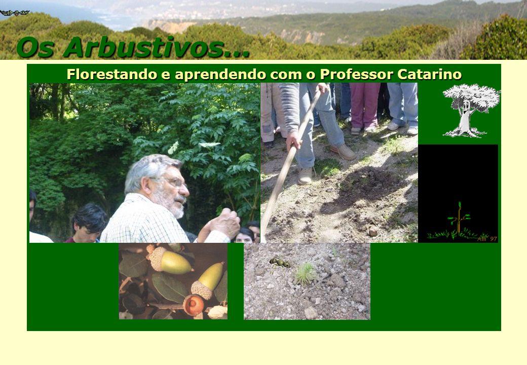 Florestando e aprendendo com o Professor Catarino Os Arbustivos Os Arbustivos Os Arbustivos… Os Arbustivos…