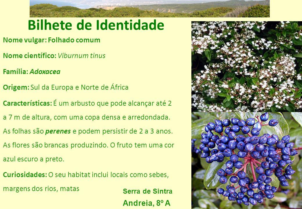 Bilhete de Identidade Nome vulgar: Folhado comum Nome científico: Viburnum tinus Família: Adoxacea Origem: Sul da Europa e Norte de África Característ