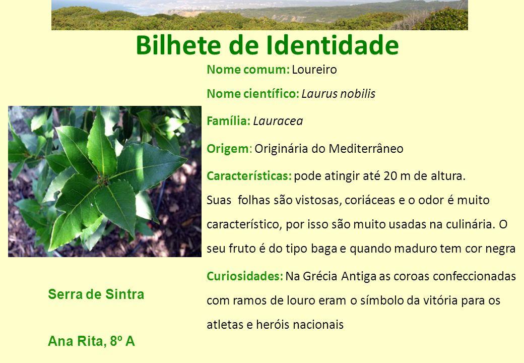 Bilhete de Identidade Nome comum: Loureiro Nome científico: Laurus nobilis Família: Lauracea Origem: Originária do Mediterrâneo Características: pode