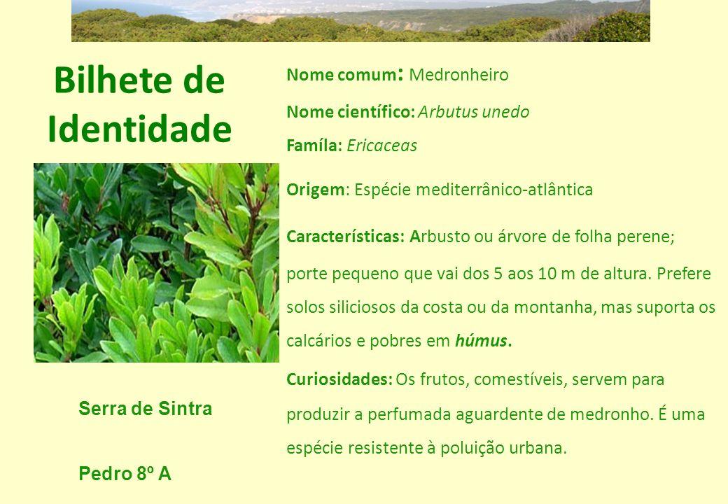 Bilhete de Identidade Nome comum : Medronheiro Nome científico: Arbutus unedo Famíla: Ericaceas Origem: Espécie mediterrânico-atlântica Característica